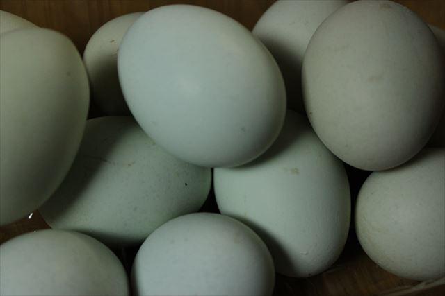 青い卵アップ